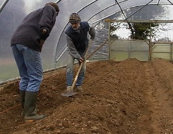 Making beds in tunnels for strawberry planting